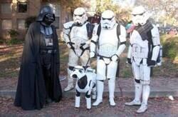 Enlace a Perro imperial