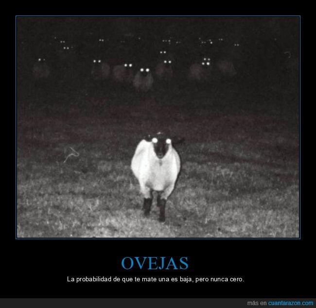 miedo,ovejas,wtf