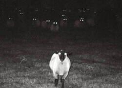 Enlace a No te fies de las ovejas