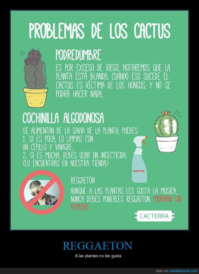 cactus,reggaeton