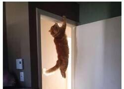Enlace a Gatos que desafían las leyes de la física