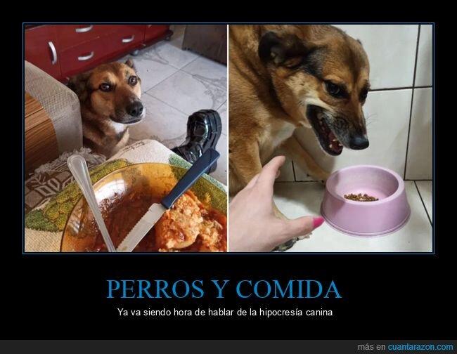 comida,hipocresía,perros