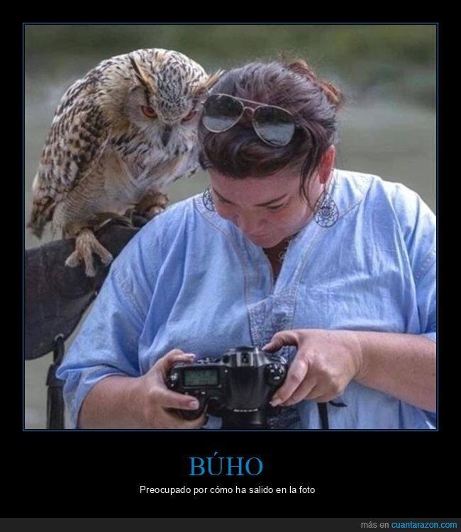 búho,foto,mirando