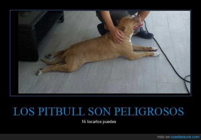 peligrosos,perro,pitbull