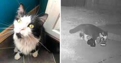Enlace a A este gato le gusta tanto robar los zapatos de los vecinos que su dueño ha creado un grupo de Facebook para devolverlos