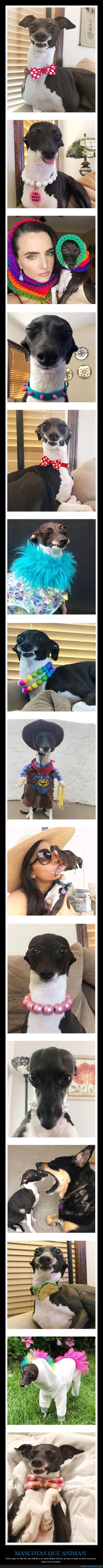 caras,perro