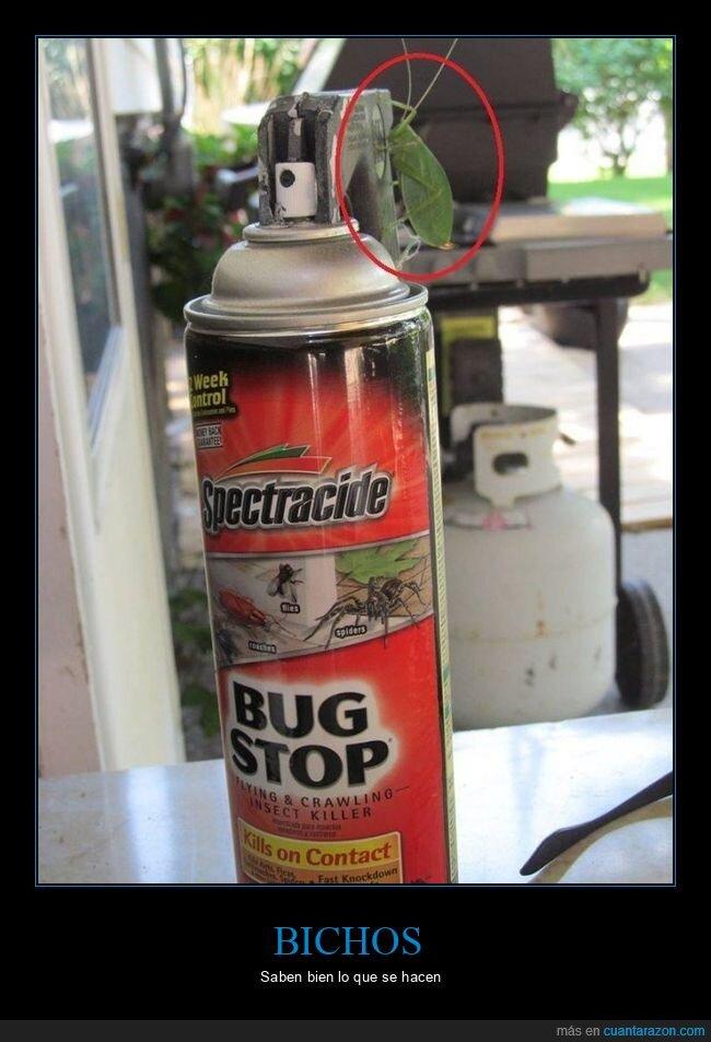 bicho,fails,insecticida