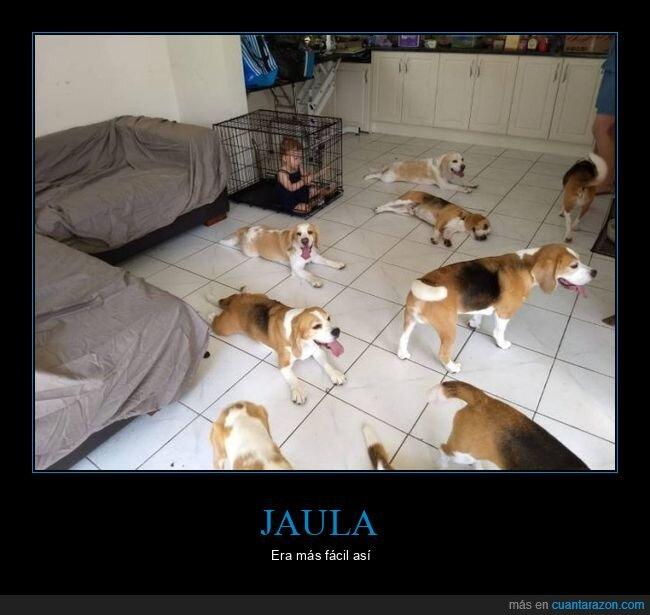 jaula,niño,perros