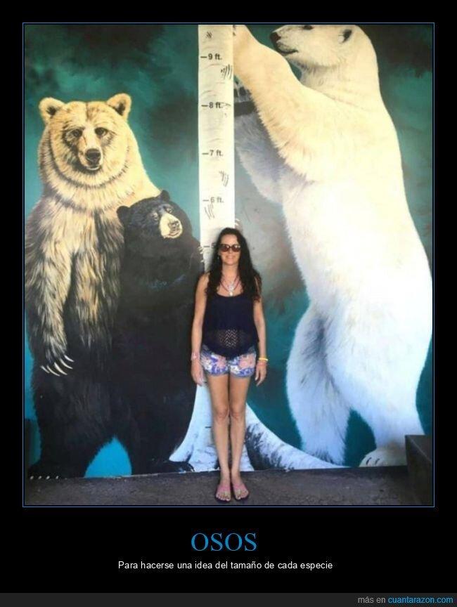 curiosidades,osos,tamaño