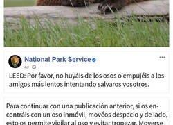 Enlace a El servicio de Parques Nacionales comparte un divertido aviso sobre qué hacer y qué no en caso de encontrarse con un oso