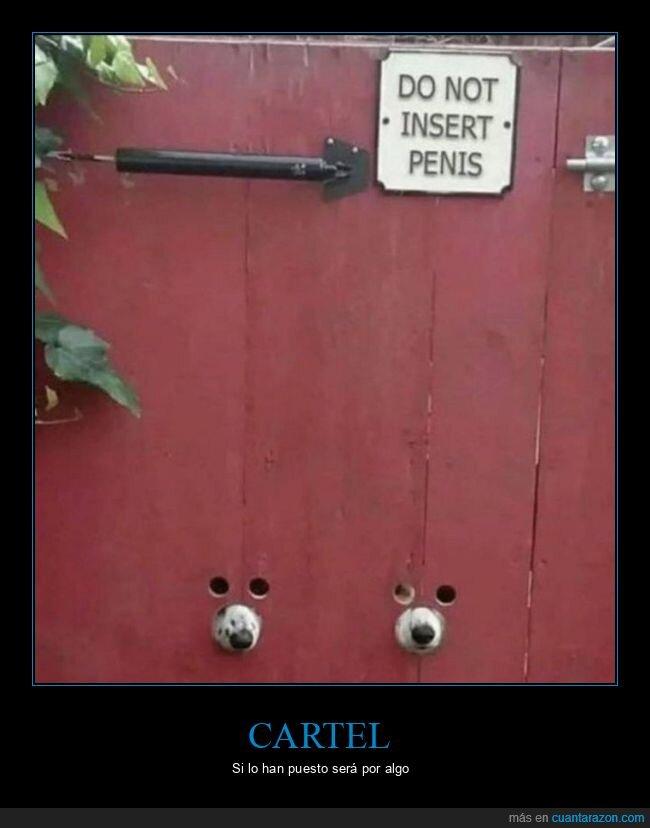 agujeros,cartel,perros,puerta