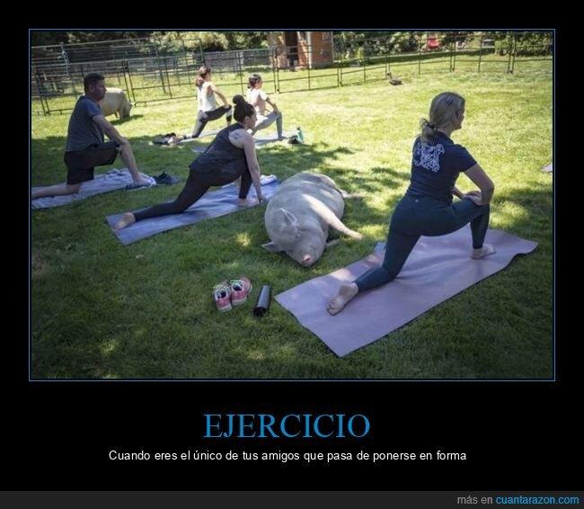 cerdo,ejercicio,wtf