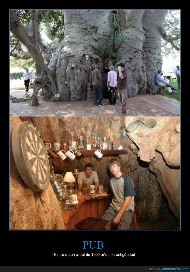 árbol,pub,wtf