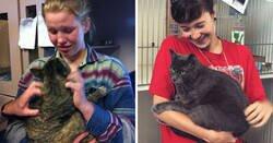 Enlace a Historias de dueños que encontraron a sus gatos perdidos años después de su desaparición
