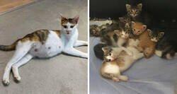 Enlace a Una compañera trajo una gata callejera preñada a la oficina, ahora son 9 y tienen su propia sala de juntas