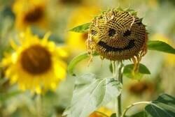 Enlace a Flor optimista