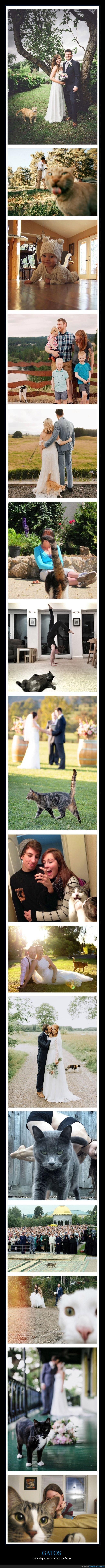 fotos,gatos,photobombs