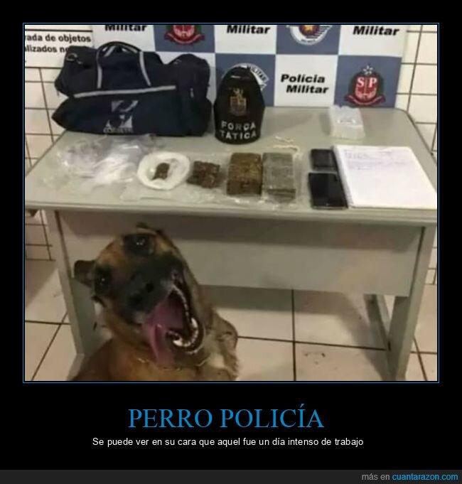 cara,drogas,perro,policía
