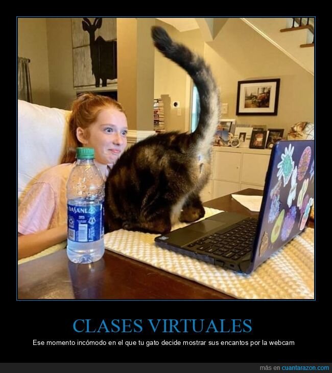 calses virtuales,fails,gato,webcam