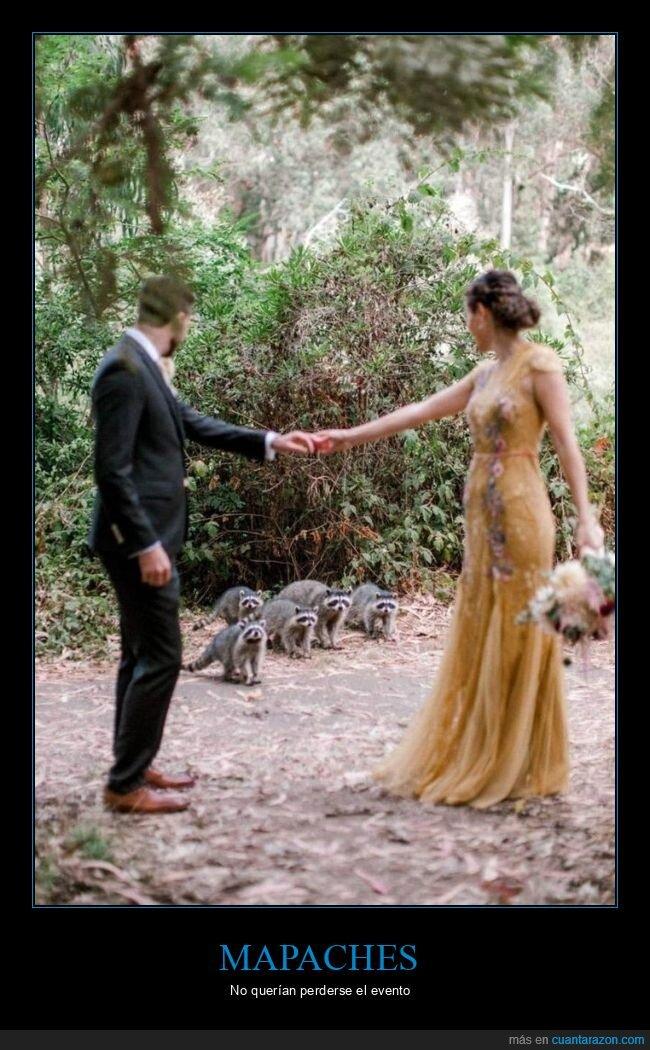 boda,mapaches,wtf