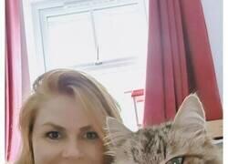 Enlace a Esta dueña encontró un collar de papel en el cuello de su gato al volver de la calle