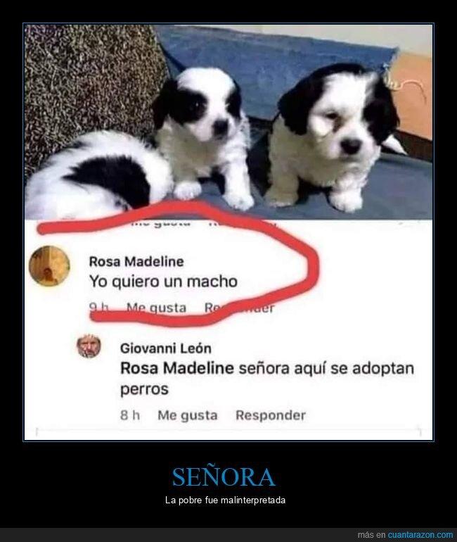 adoptar,macho,perros,señoras