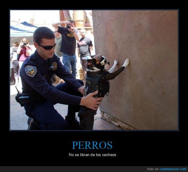 cacheando,perro,policía,wtf