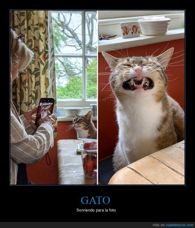 foto,gato,sonrisa