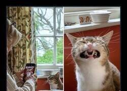 Enlace a Sonrisa felina