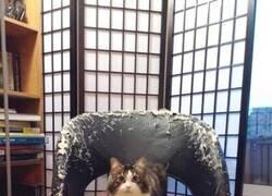 Enlace a La silla del gato