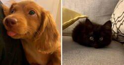 Enlace a Fotos muy reconfortantes de mascotas rescatadas en el mes de Agosto