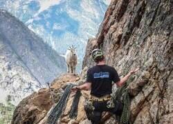 Enlace a Esa cabra no esperaba visitas