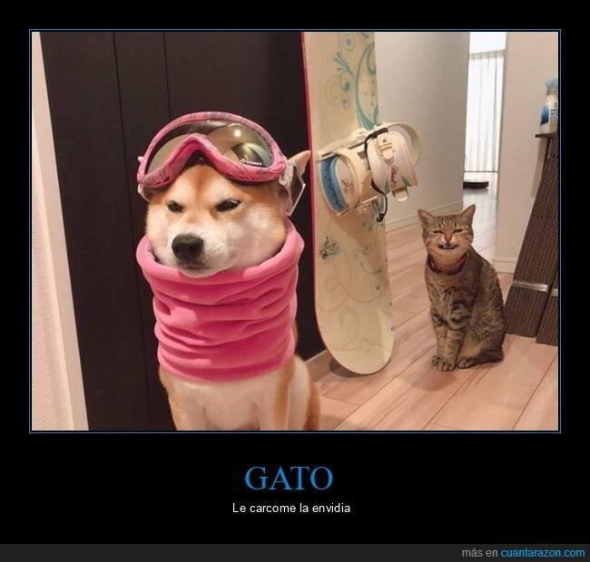 gato,perro,snowboard