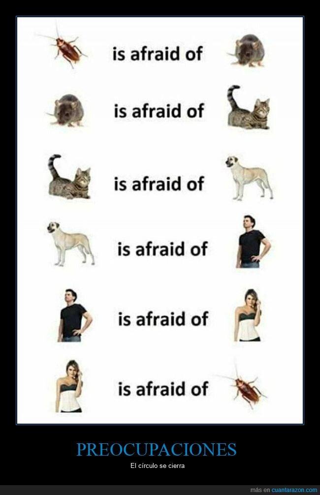 cucaracha,gato,hombre,mujer,perro,preocupaciones,ratón