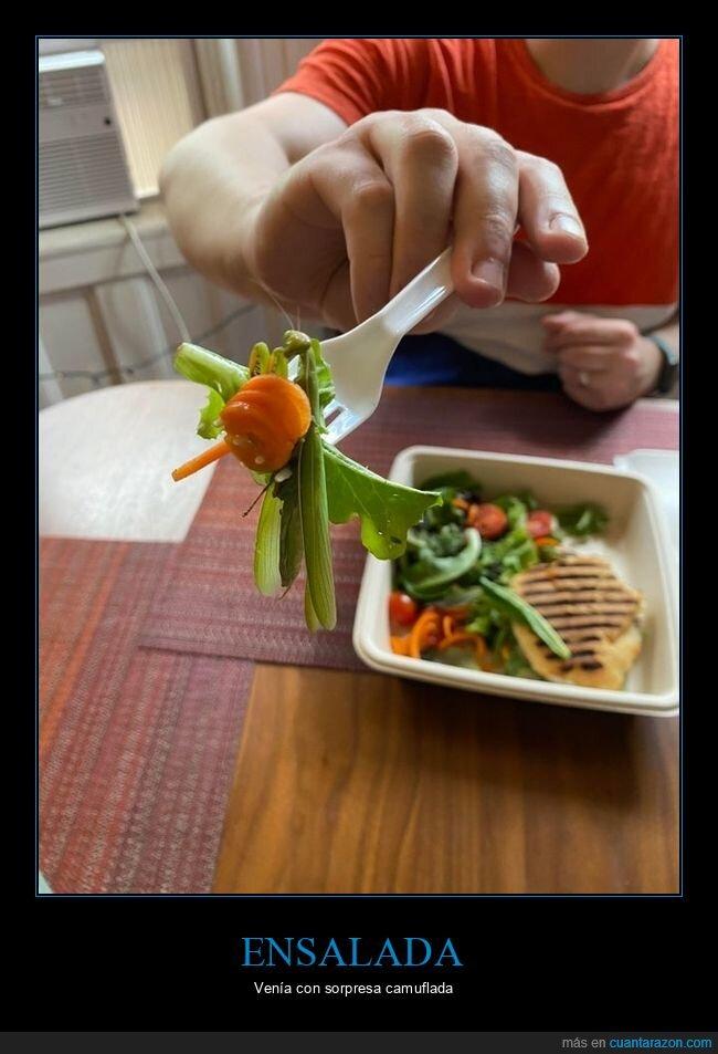 ensalada,mantis,wtf