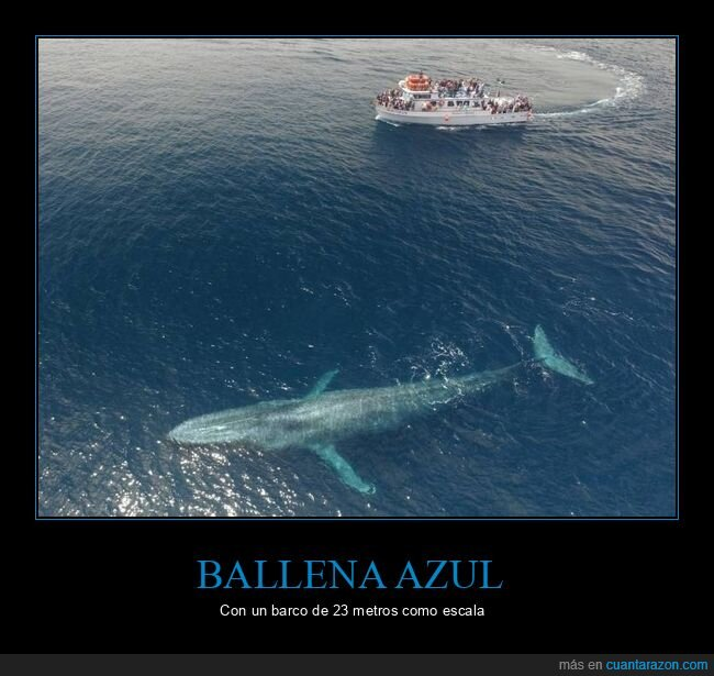 ballena azul,barco,tamaño