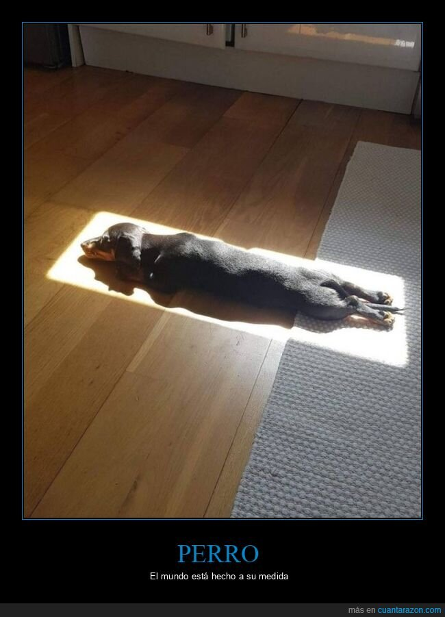 medida,perro,sol