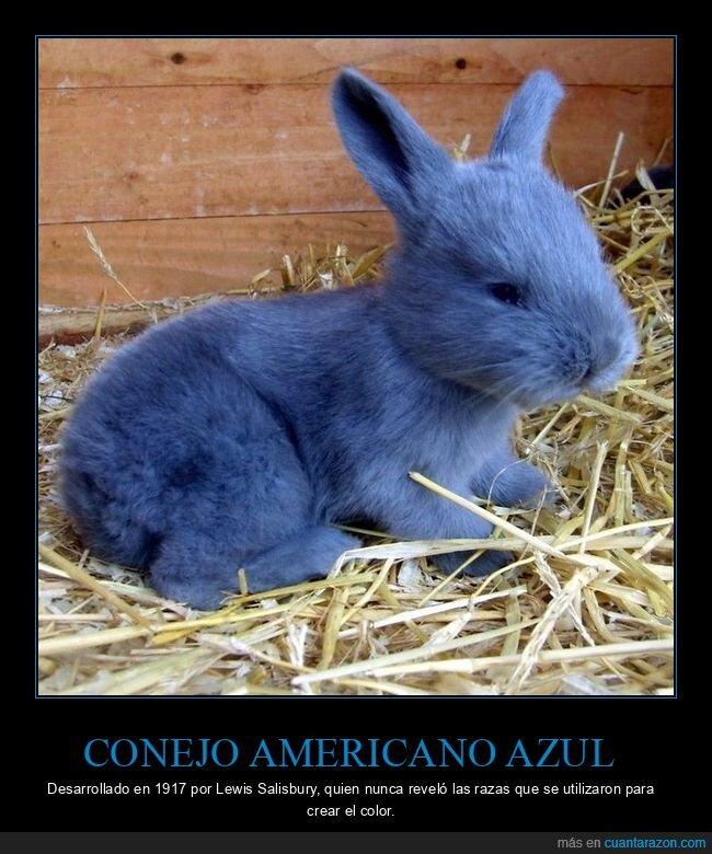 azul,conejo,wtf