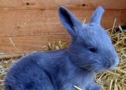 Enlace a Un conejo muy peculiar
