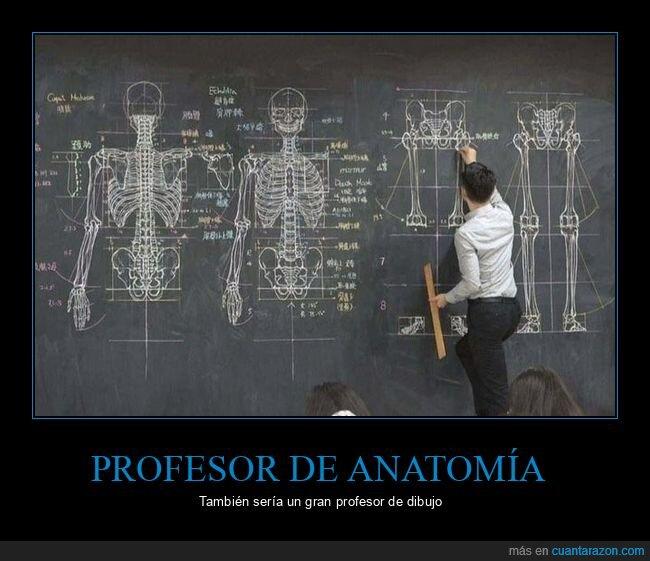 anatomía,dibujo,profesor