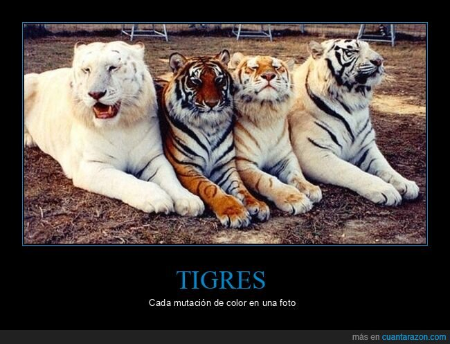 color,mutaciones,tigres