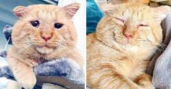 Enlace a Tras convencer a su casero, esta mujer trajo a casa al más triste gato callejero. Un año después, está irreconocible
