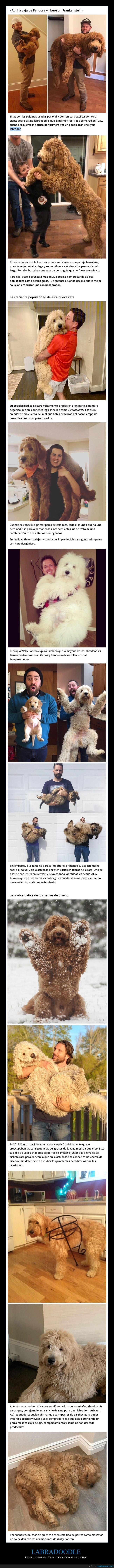 cruces,labradoodle,perros