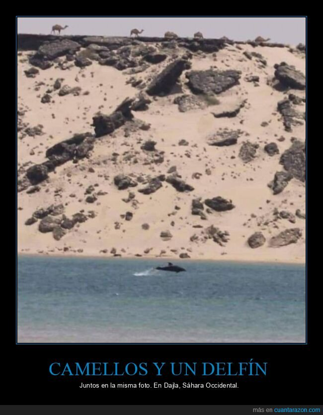 camellos,dajla,delfín,sáhara occidental