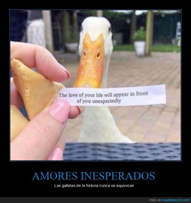 amor,galleta de la fortuna,inesperado,pato