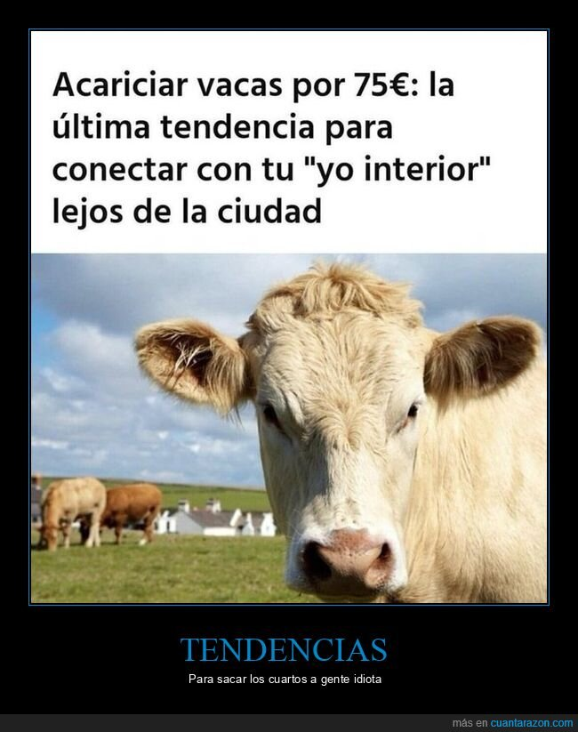acariciar,pagar,vacas