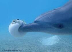 Enlace a Delfín politoxicómano