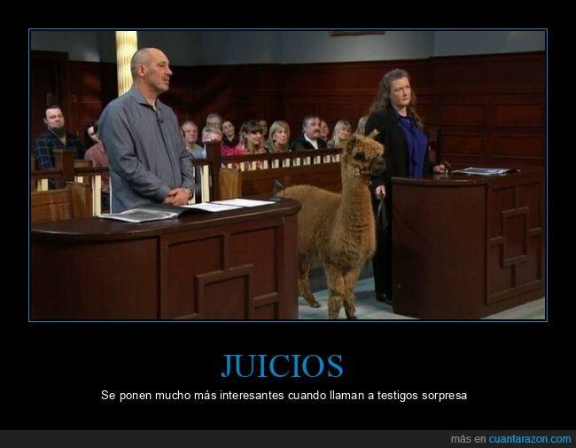 alpaca,juicio,wtf