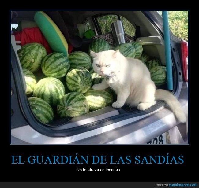 gato,guardián,sandías