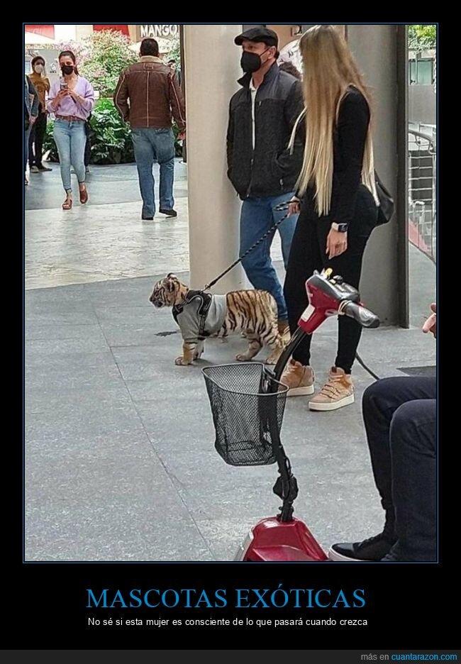 mascota,tigre,wtf